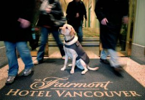 hotel security dogs for sale