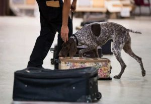 luggage-detection-dogs