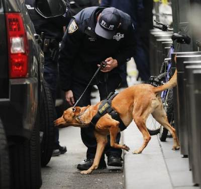 What breed of dogs are used for bomb detection