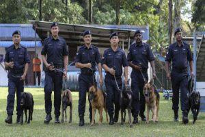 dog handler training courses
