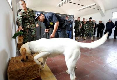 Explosive-detection-dog-handler-training
