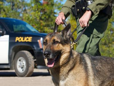 what dogs are used as police dogs ?