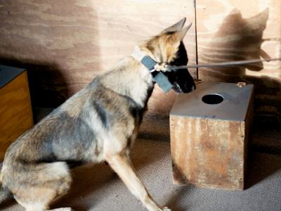 what kind of explosives will dogs detect ?