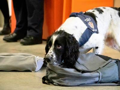 how are sniffer dogs trained ?