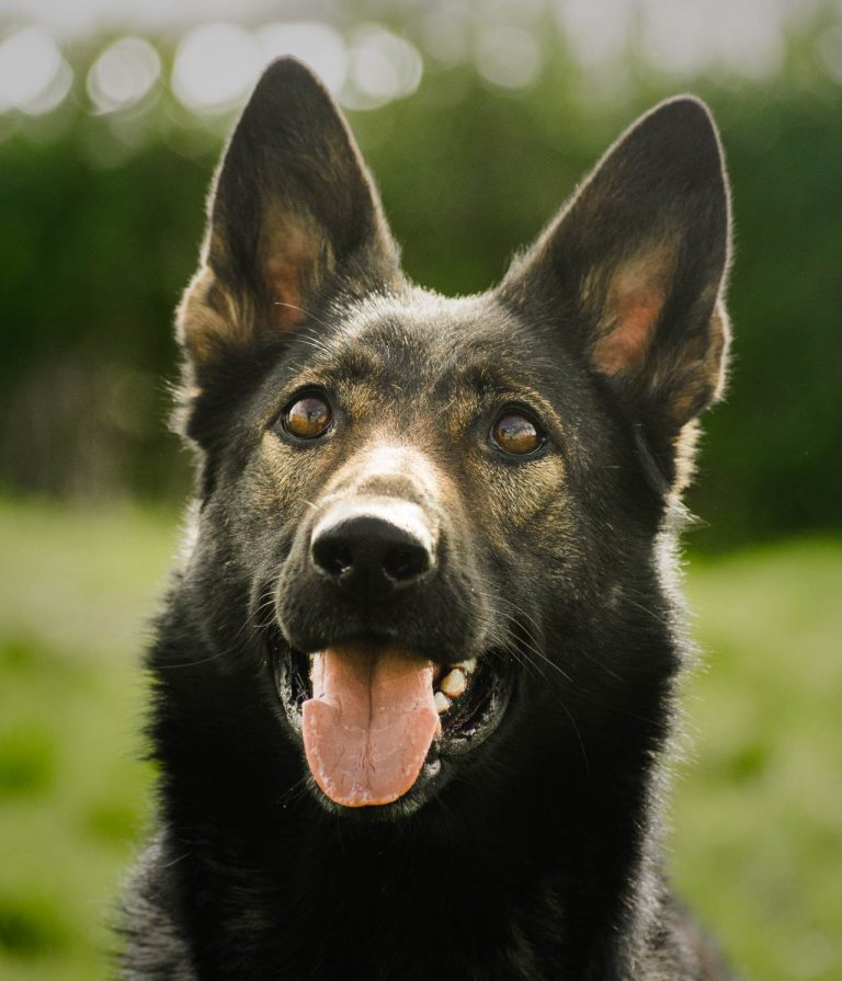 Are Police Dogs Friendly ?