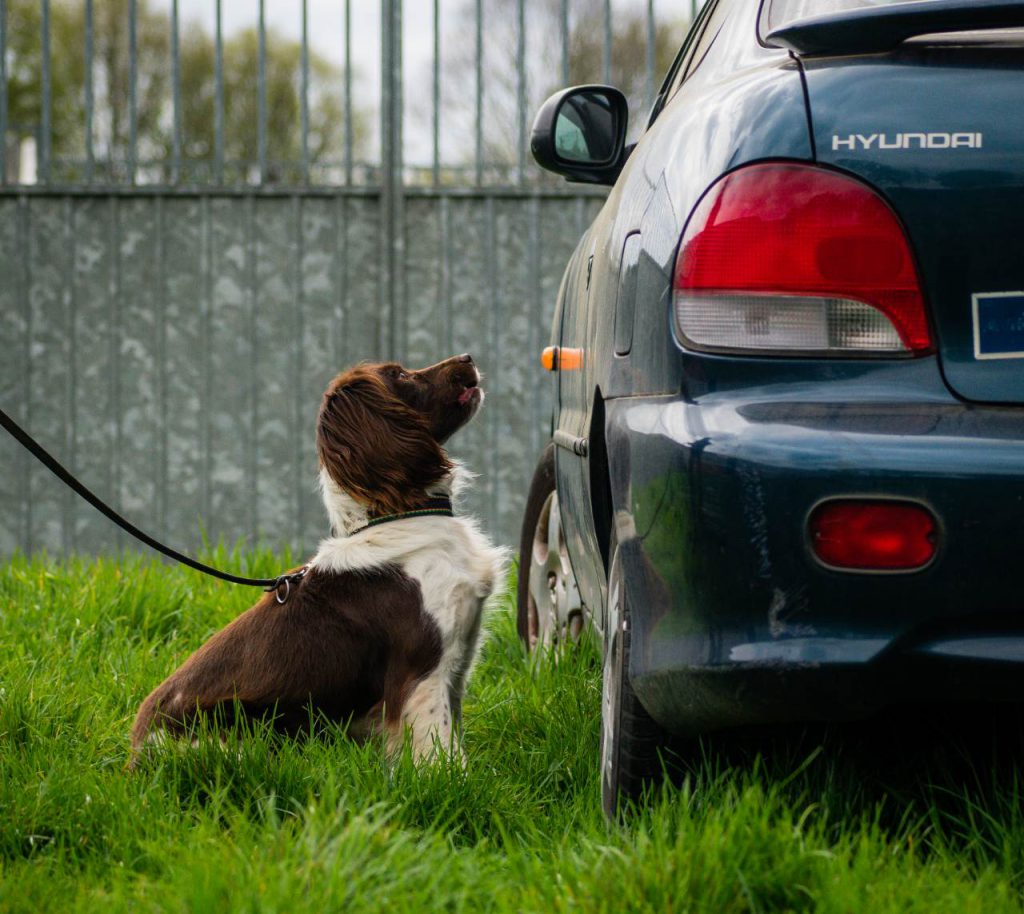 how are sniffer dogs trained