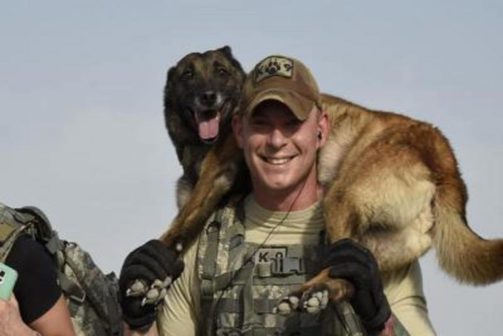 military working dogs for sale